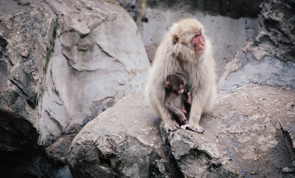 Tokyo&Zoo-199.jpg
