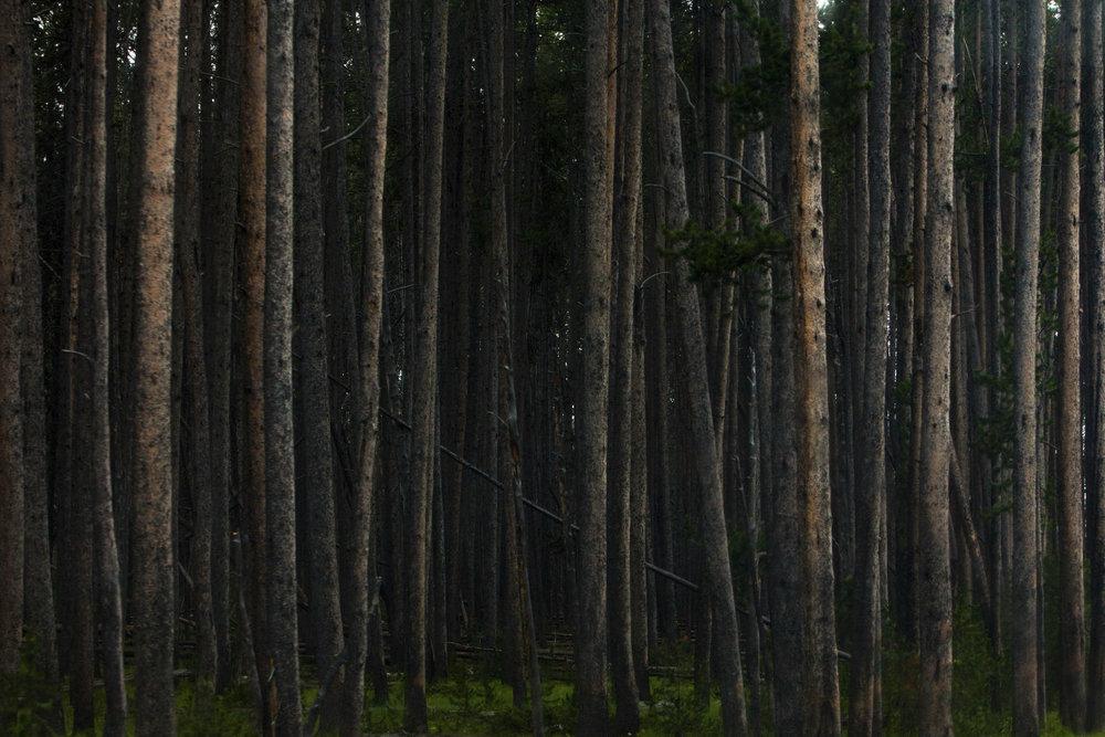 Carl_Zoch_Landscape_003.jpg