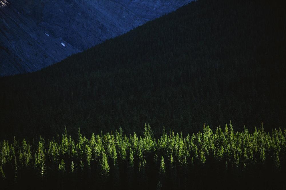 Carl_Zoch_Landscape_018.jpg