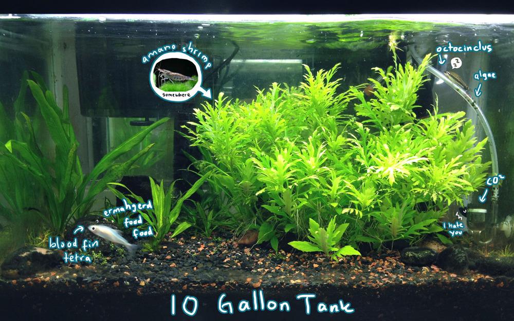 My 10 gallon tank thousand skies for 4 gallon fish tank