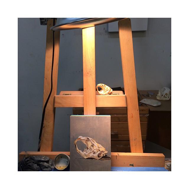 """(Unfinished) 7.5""""x5"""", Muskrat Skull Study. #wip #artstudio #muskrat #oilonpanel #oilpainting #skull #fineart #instaart #newartwork #Brooklyn #greenpoint #easel #paint"""