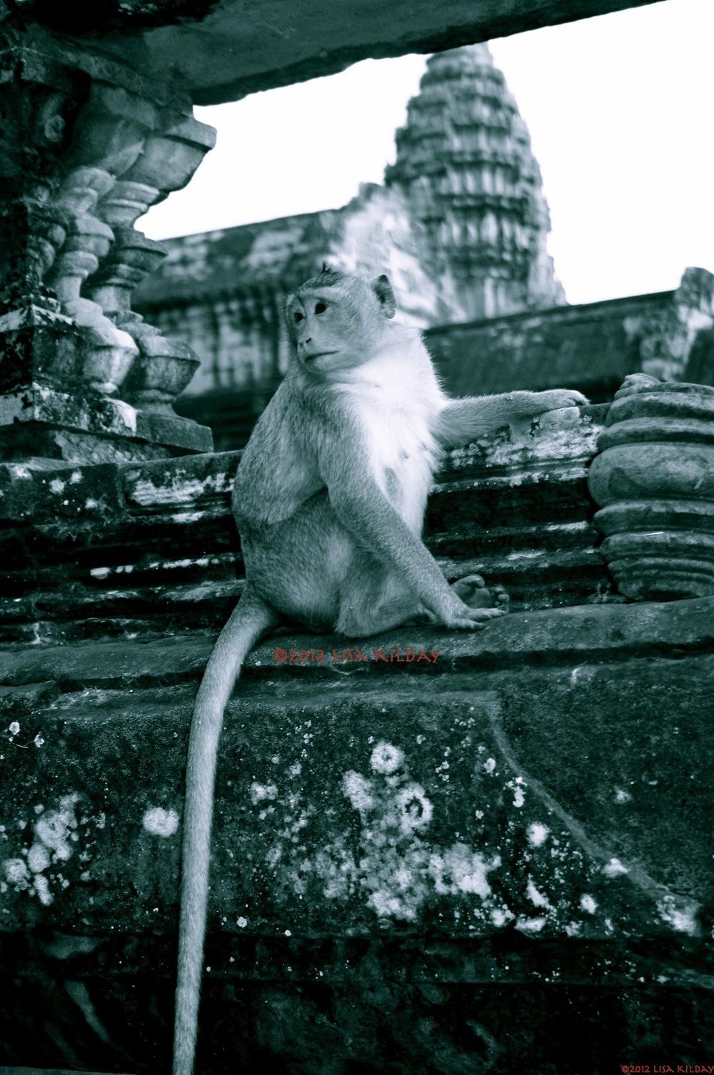 Monkey Brain