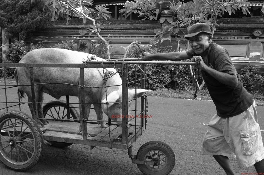 Pig Pushing