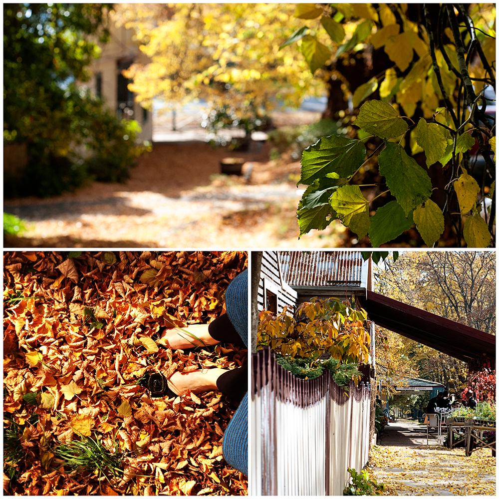 daylesford_autumn_small.jpg