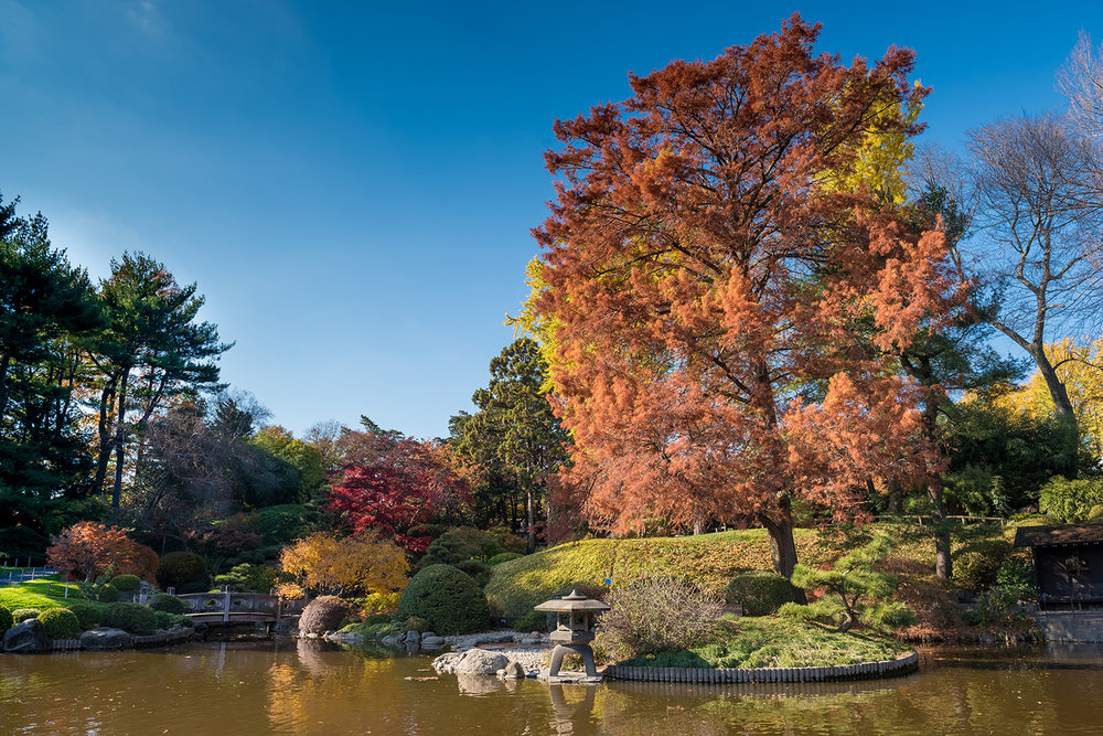 The Japanese Hill-and-Pond Garden at the Brooklyn Botanic Garden, NYC.