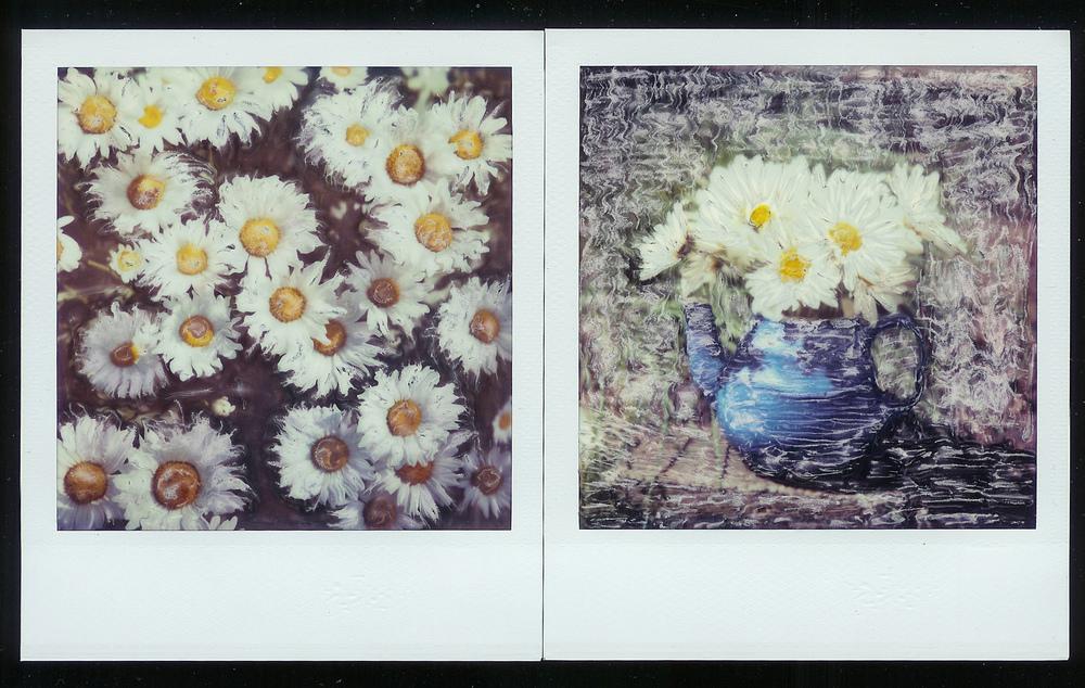 daisy dyptich.jpg