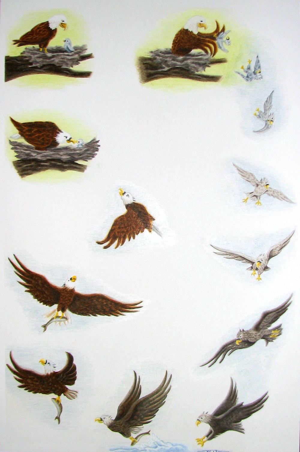 eagle full circle