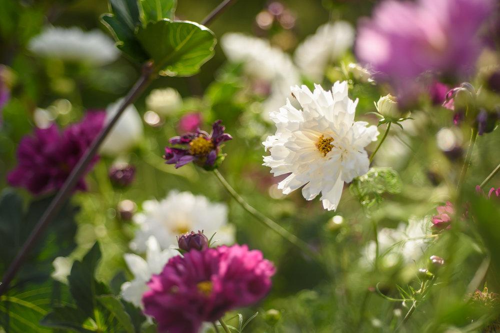 wildflower farm her heartwork photography