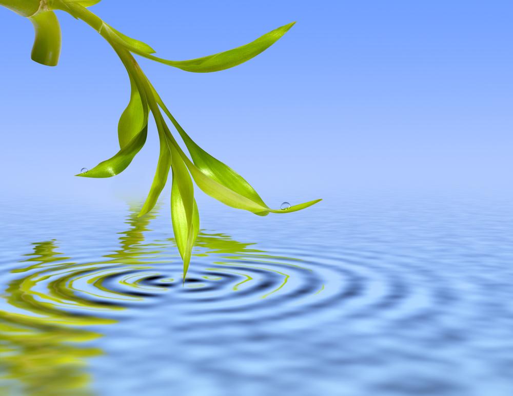 CW logo green leaf blue water ripple.jpg
