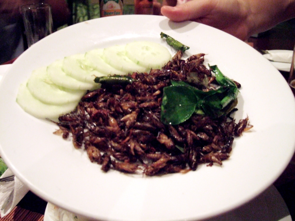 Insect Dish.JPG