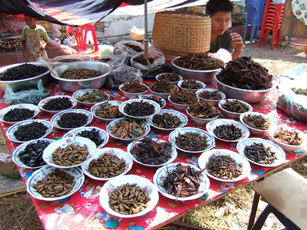 Variety of Insects.JPG