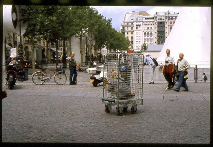 01_The-Cage-II_Vanessa_Lodigiani.jpg