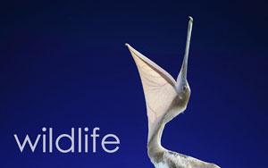 WildlifeText.jpg