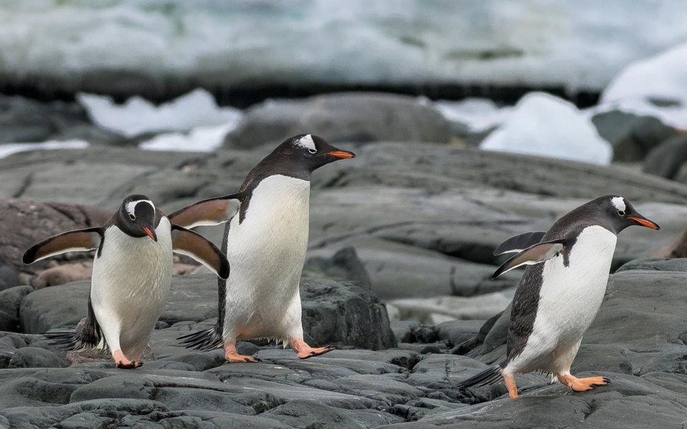02 Antarctica 2018 Lecture 2.jpg