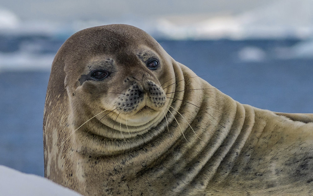 14 Antarctica 2017 Lecture.001 copy.jpg