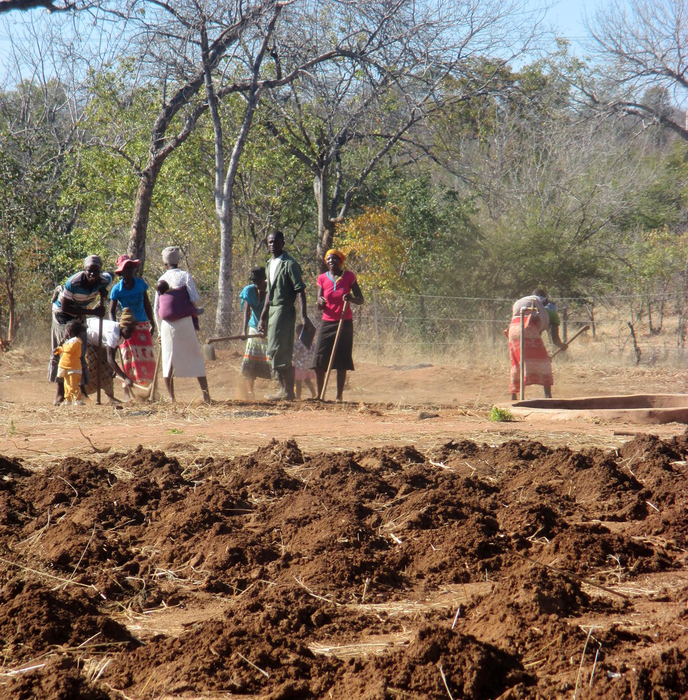 A gift from a private benefactor to this school in Hwange District has provided funding not only for improved facilities but also a community garden which grows food for school lunches. In this photo, parents of school children volunteer to help tend the garden, which is the only reliable source of food for many families. But such school garden programs are a rarity.