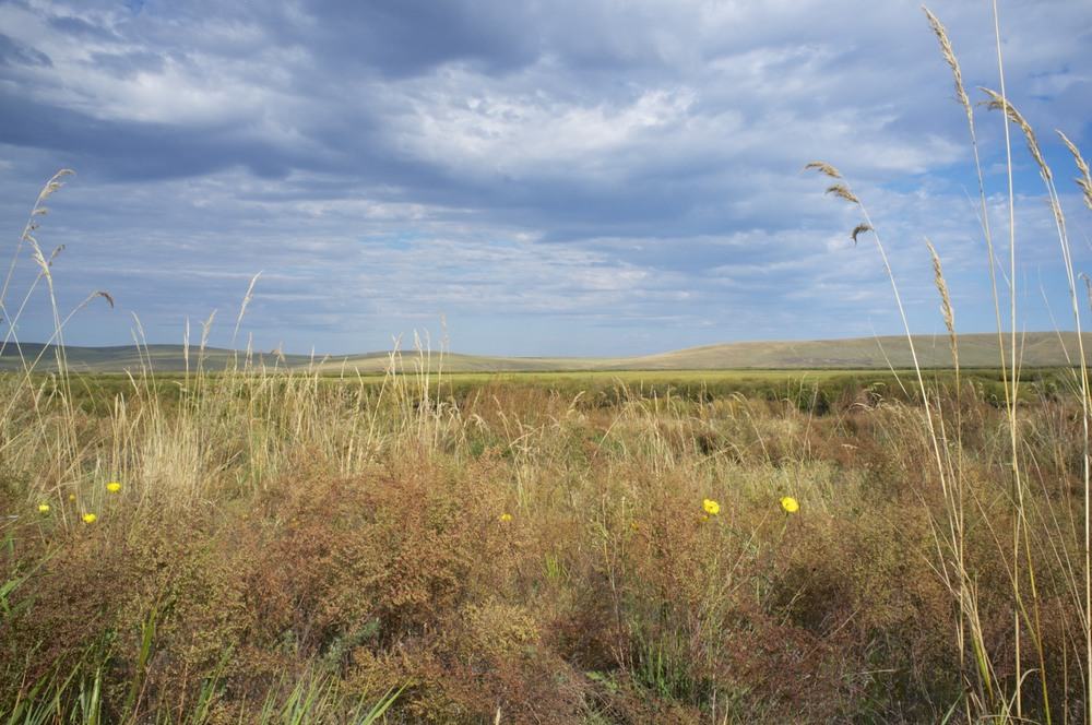 Inner Mongolian Grassland, North of Hailar (People's Republic of China).