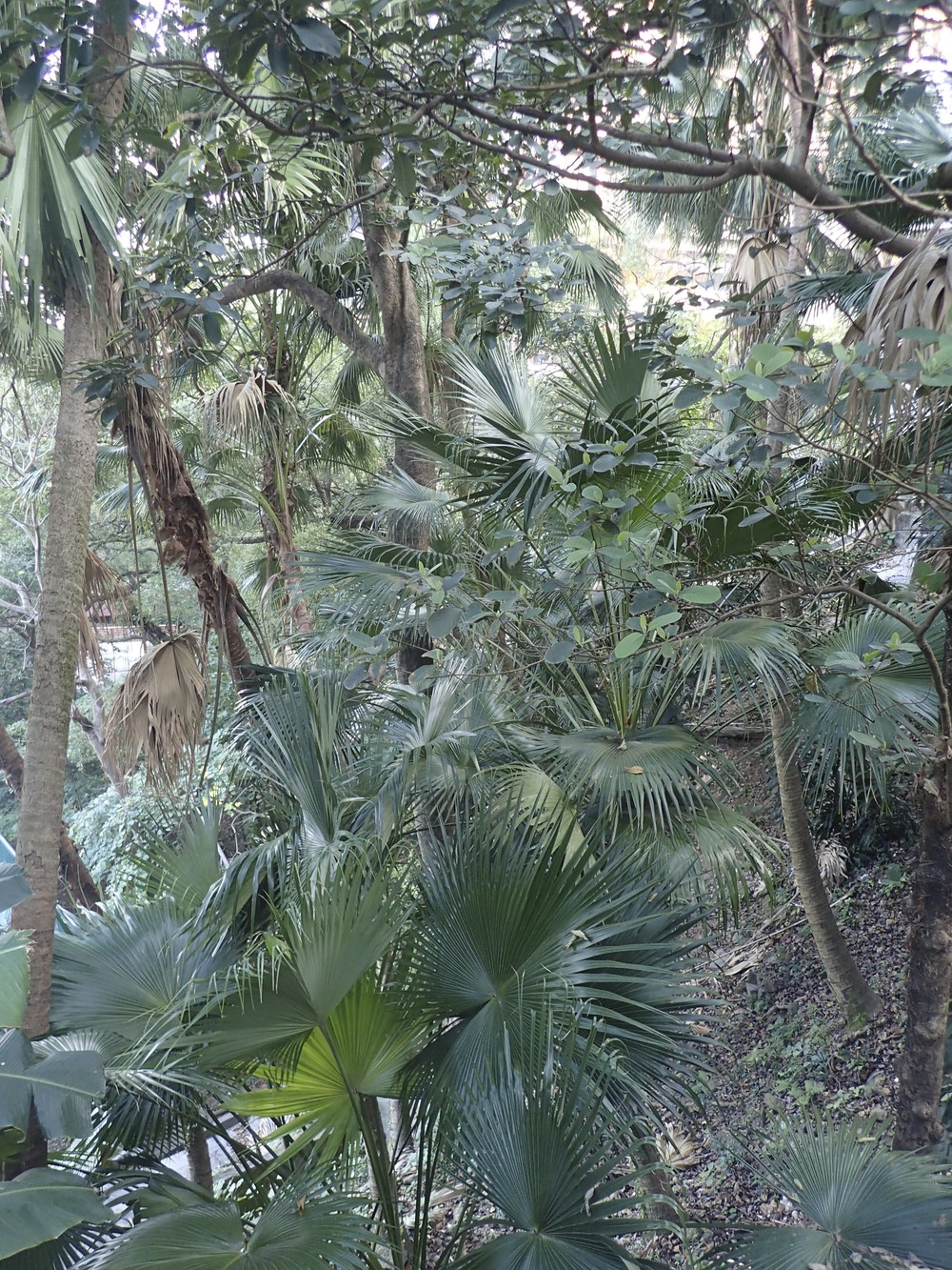 Jungle Book view from Robert Black College Guesthouse.
