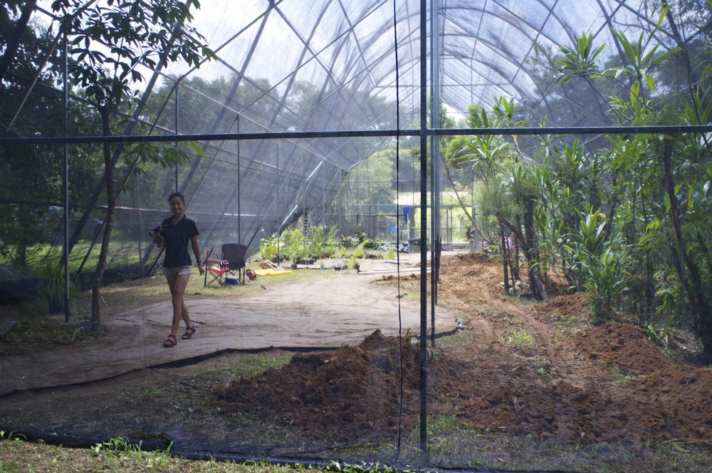 Butterfly house in the making at Dundee Park, Mission Beach, Queensland, Australia