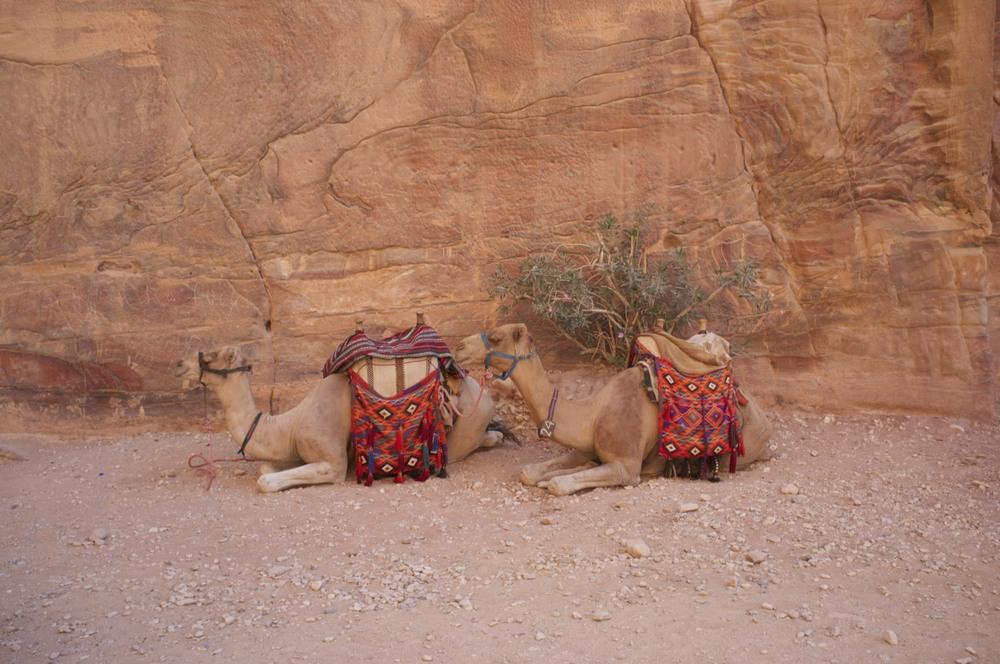 Jordan, towards Wadi Rum.