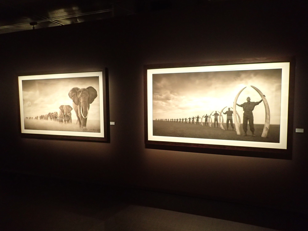 "A snapshop in the exhibition """"On this Earth a Shadow Falls Across the Ravaged Land"" by Nick Brandt. Please go to his  website  for more."