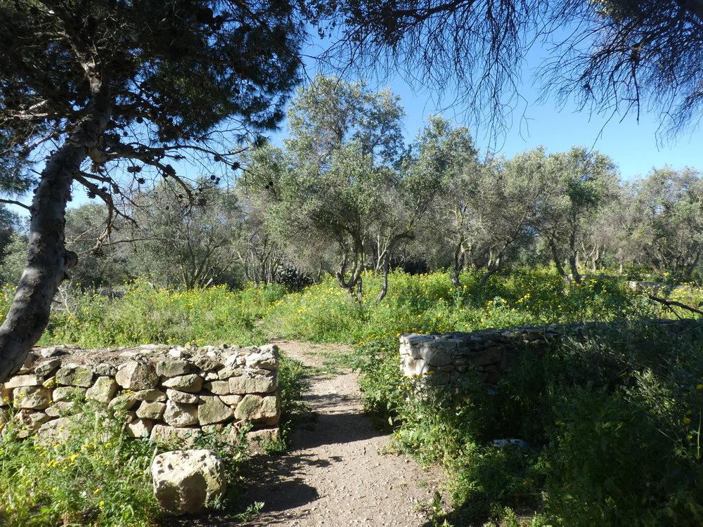 Path through the Is-Sabbara Woodland