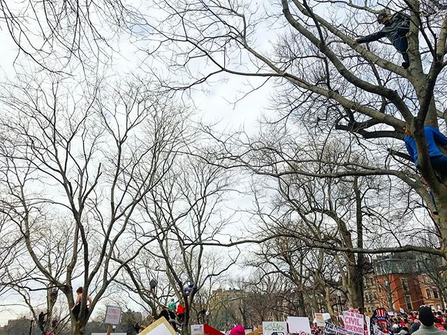 We're in the trees, man. #fight #solidarity #womensmarch #womensmarchboston #lovetrumpshate #blessed #yae #love #march #boston #rally #usa
