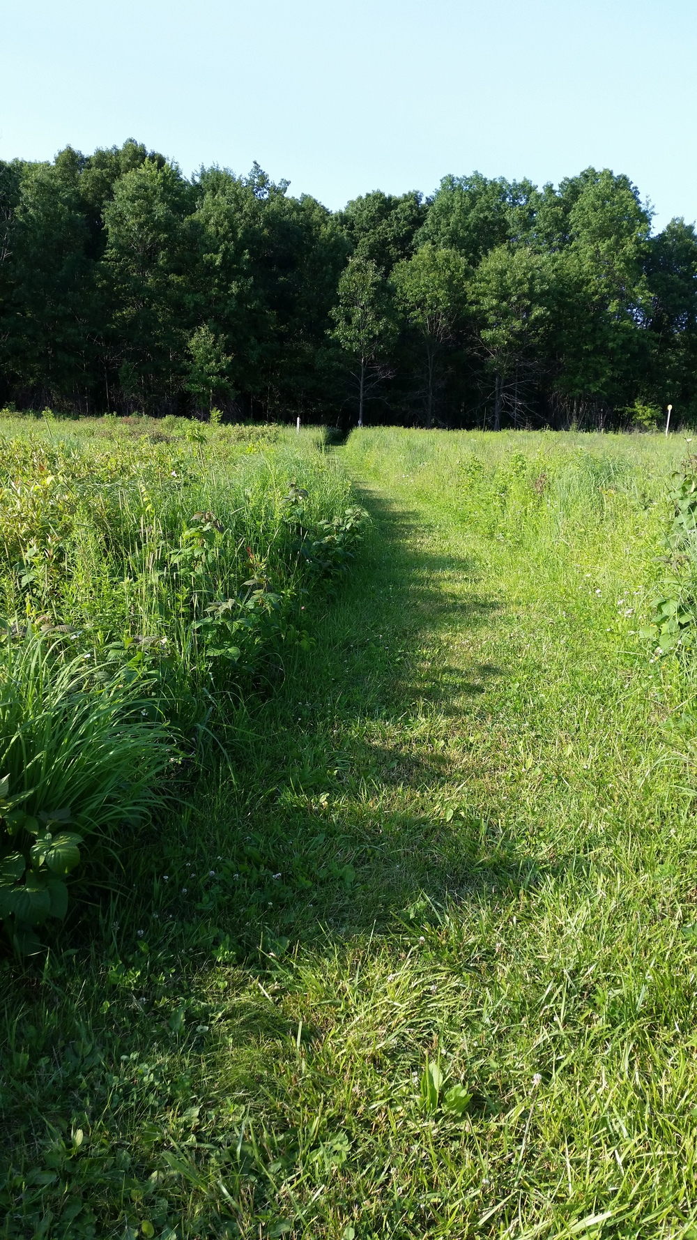 Minoke Prairie, tall grass prairie restored at the Little Calumet River Trail