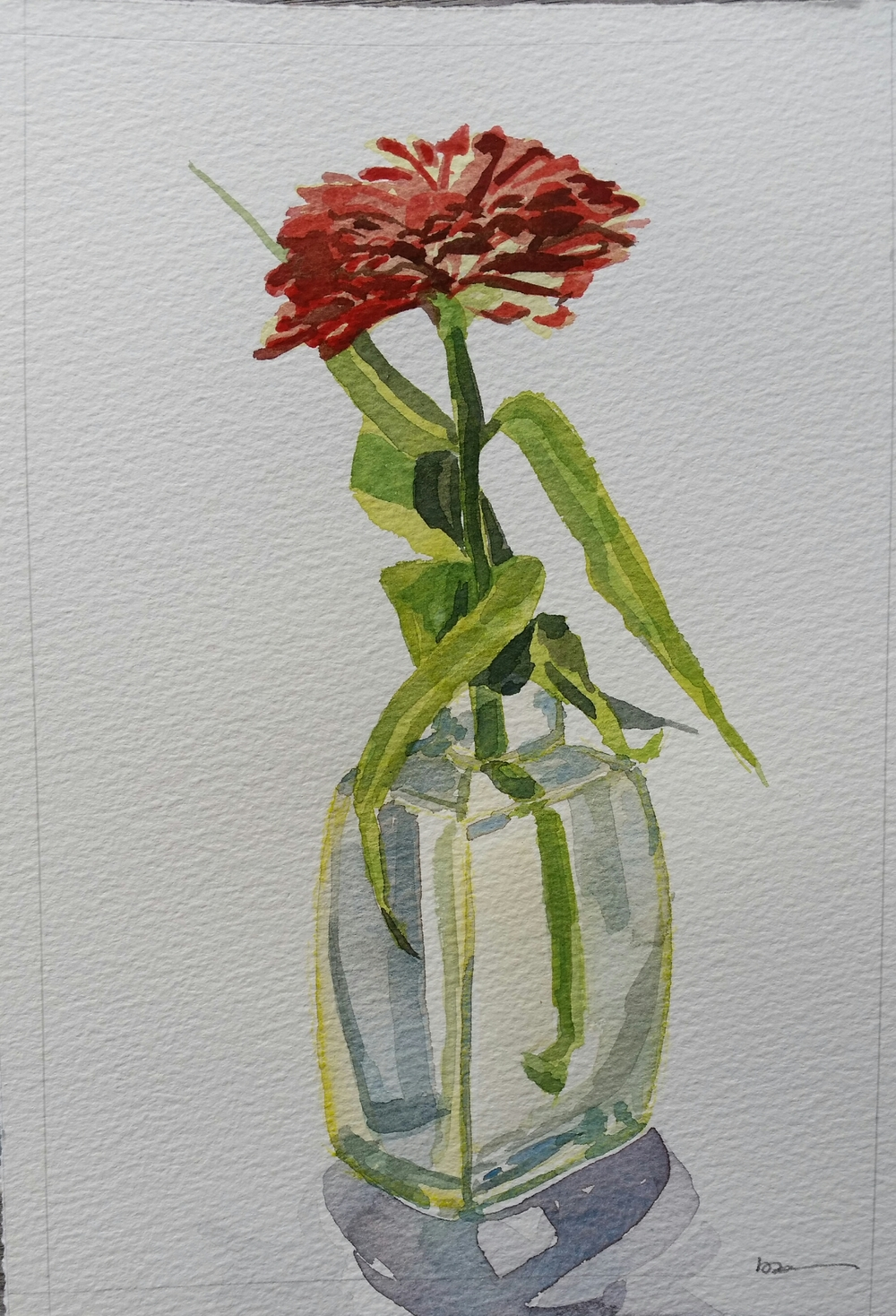 Red Zinnia in Bottle,