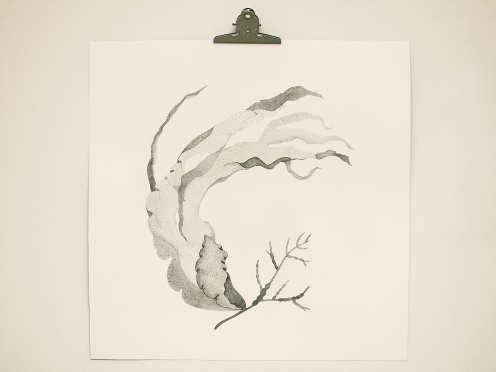 seaweed1.png