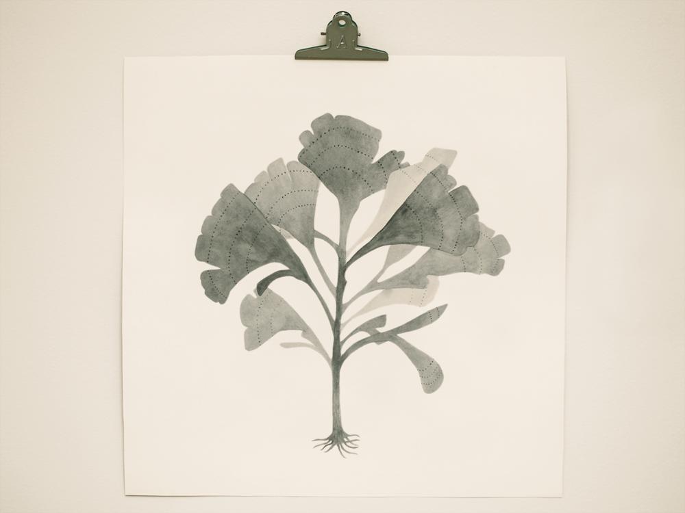 seaweed2.png
