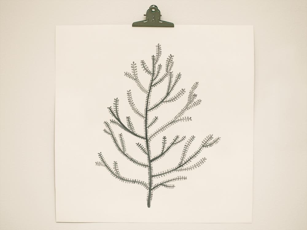 seaweed3.png