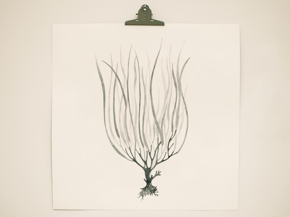 seaweed4.png