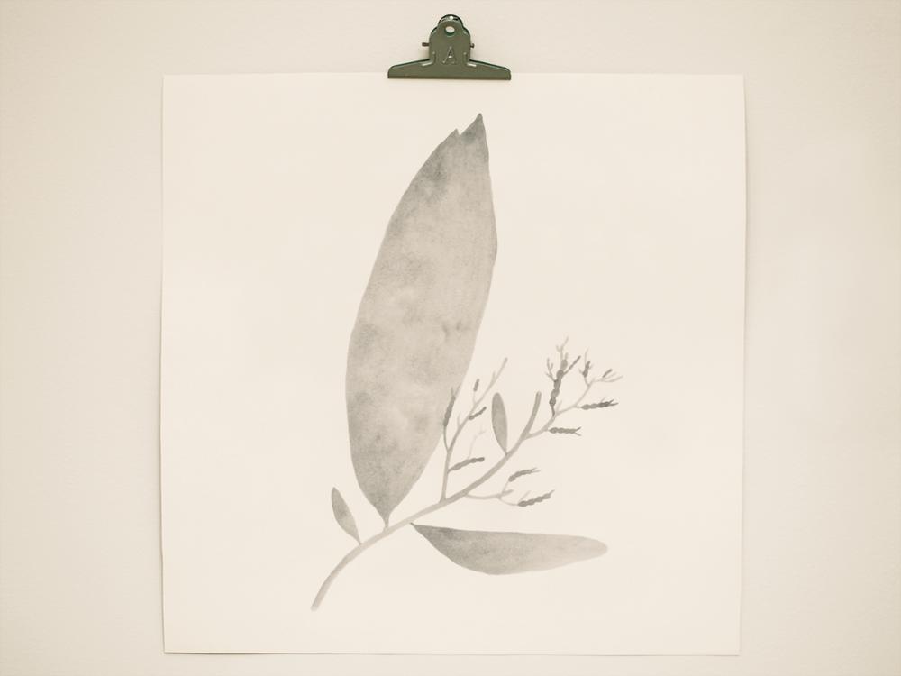 seaweed5.png