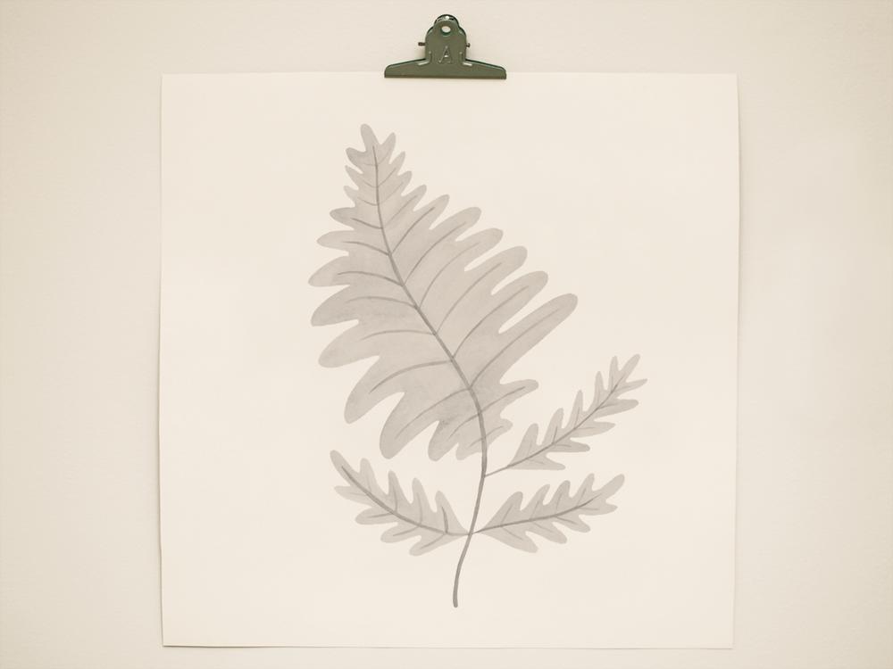 seaweed7.png