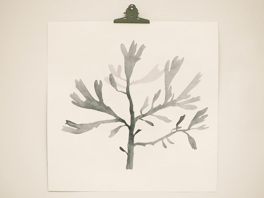 seaweed6.png