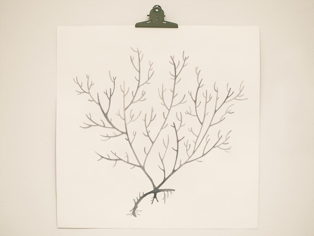 seaweed8.png