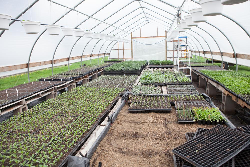 Many, Many Plant Starts