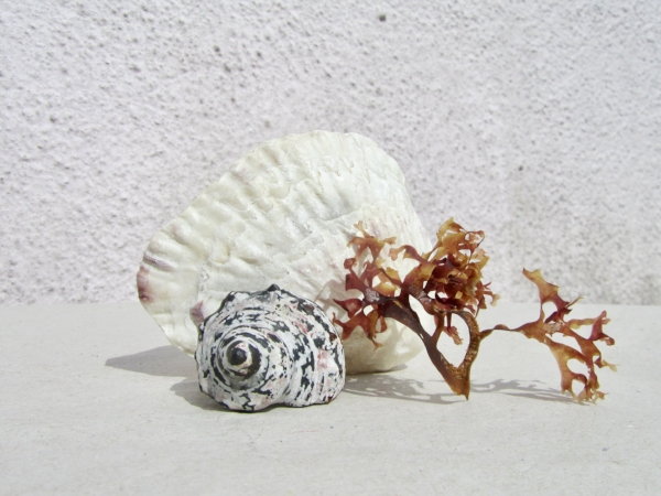 "Resin, Carnelian & Silver Ring from New Collection ""Conchology"" amongst some beach finds"