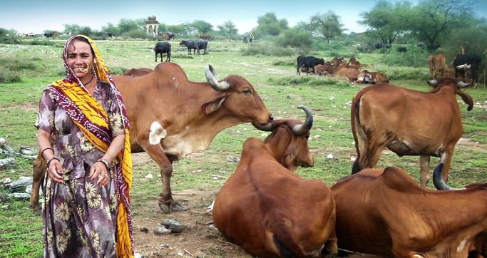 – Venture Dairy, India