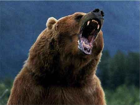 bear cranky