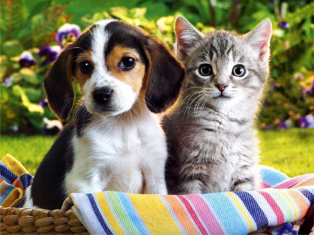 kittens_puppies.jpg