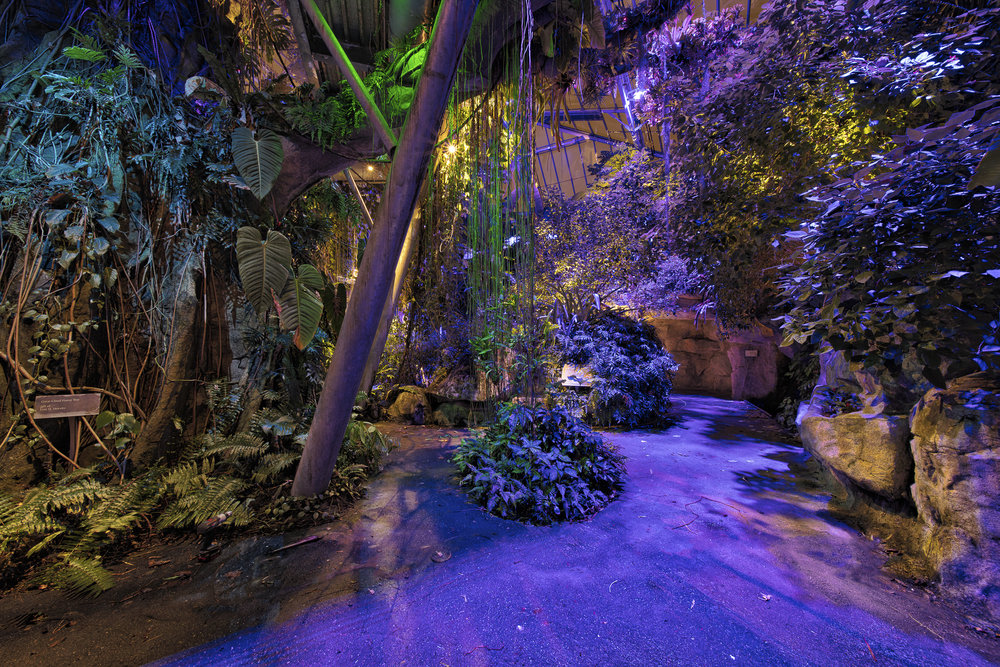 Glasshouse Relighting - Cleveland Botanical GardensCleveland, Ohio