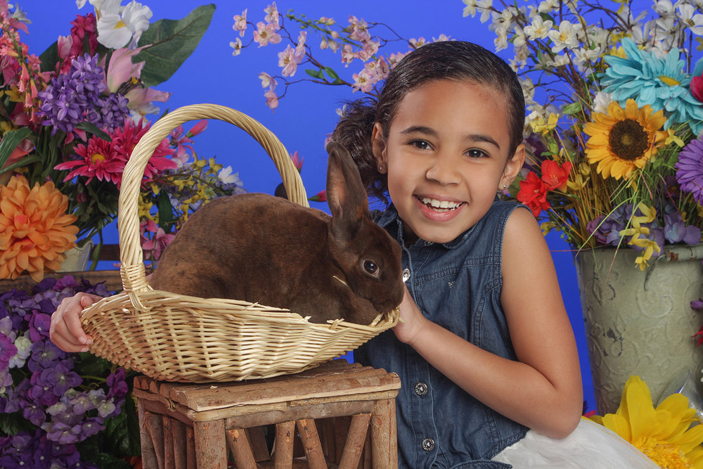 Bunny Portraits with Real Bunnies