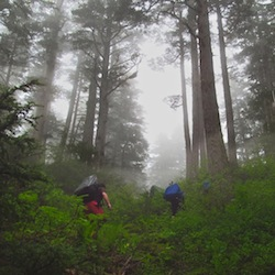 "Ascending the ""vertical swamp"" en route to Camp 17.  Photo:  B. Partan"