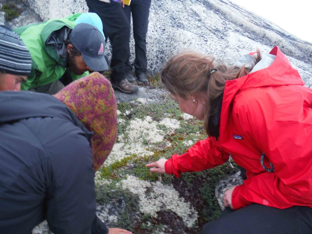 "Dr. Polly Bass talking with JIRP students about the cushion plants and lichens on the ""Taku B"" nunatak along the Taku Glacier in Southeast Alaska. Photo by Sarah Bouckoms."