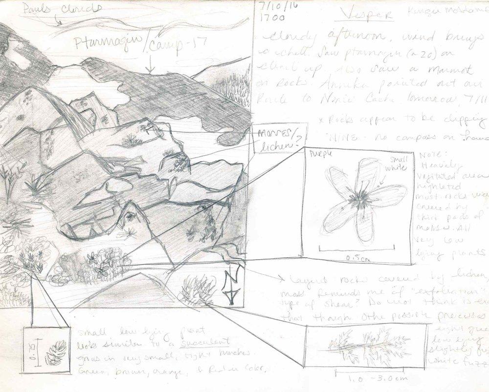 2016-field-sketch_0002_sm.jpg
