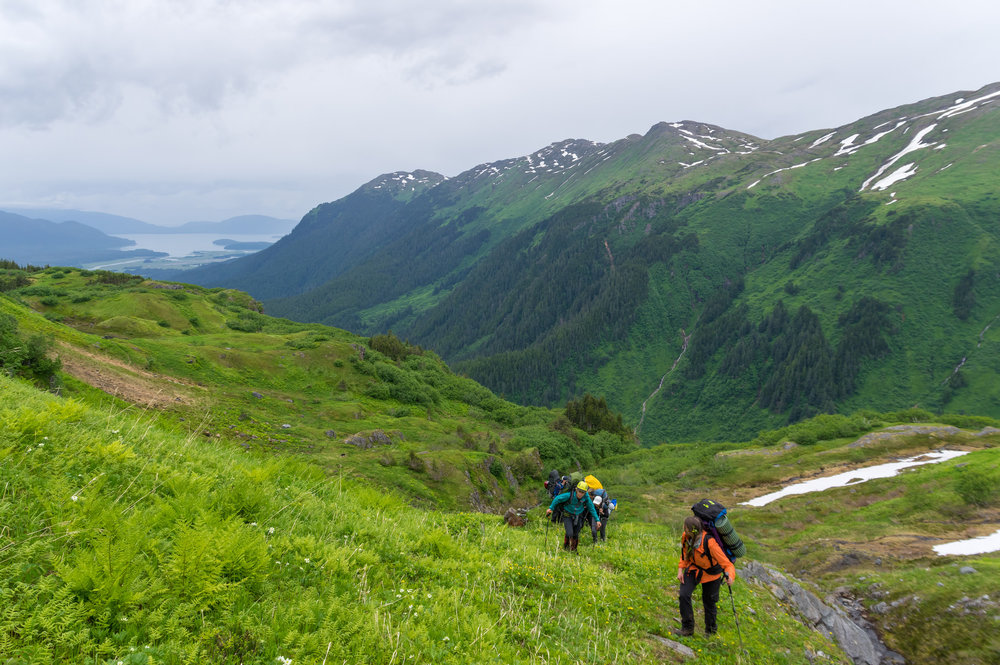 A trail party crosses treeline and hikes up into the grassland on the way from Juneau to Camp 17. Photo: Daniel Otto.