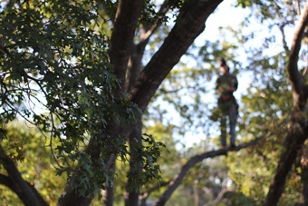 Trimming overgrown and dead limbs is key to a healthy tree's health.