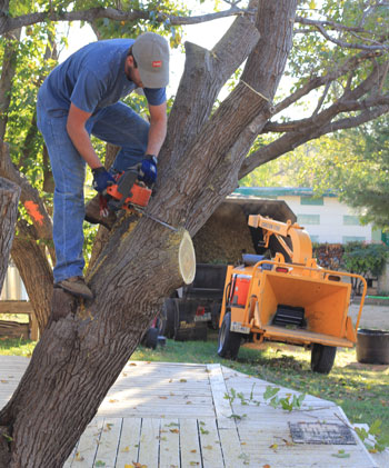 Consult a licensed tree service before removing a tree.